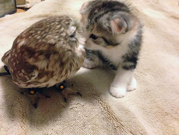 kitten-owl-best-friends-fuku-marimo-hukulou-coffee-japan-52