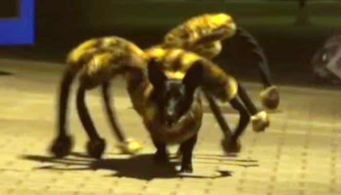 270980-spider-dog-1