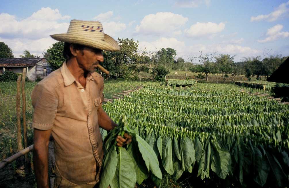 pinar-del-rio-vinales-tobacco-1