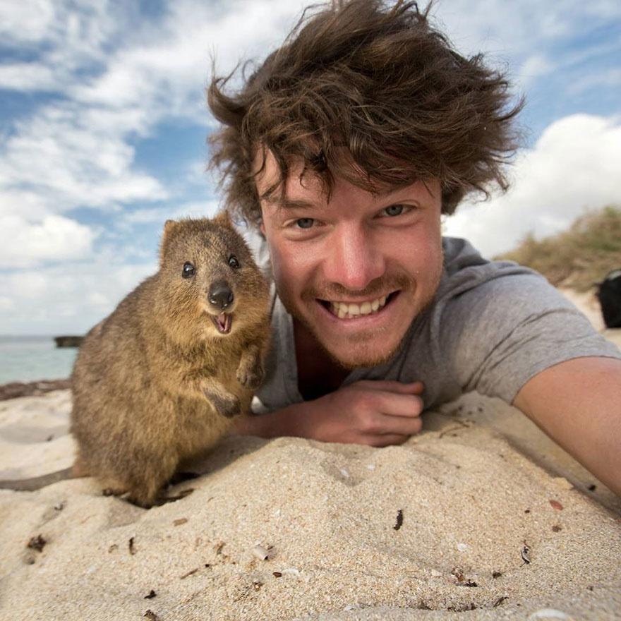 5511410-880-1450945704-funny-animal-selfies-allan-dixon-13
