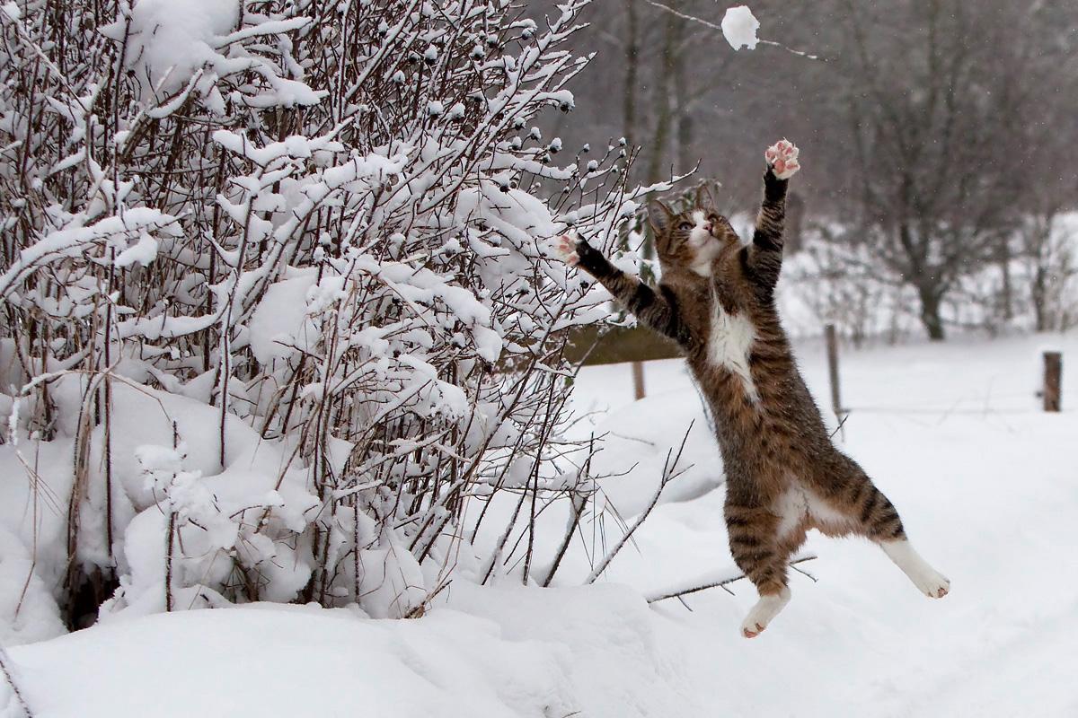 стягивал картинки кот радуется зиме продажи прошлый