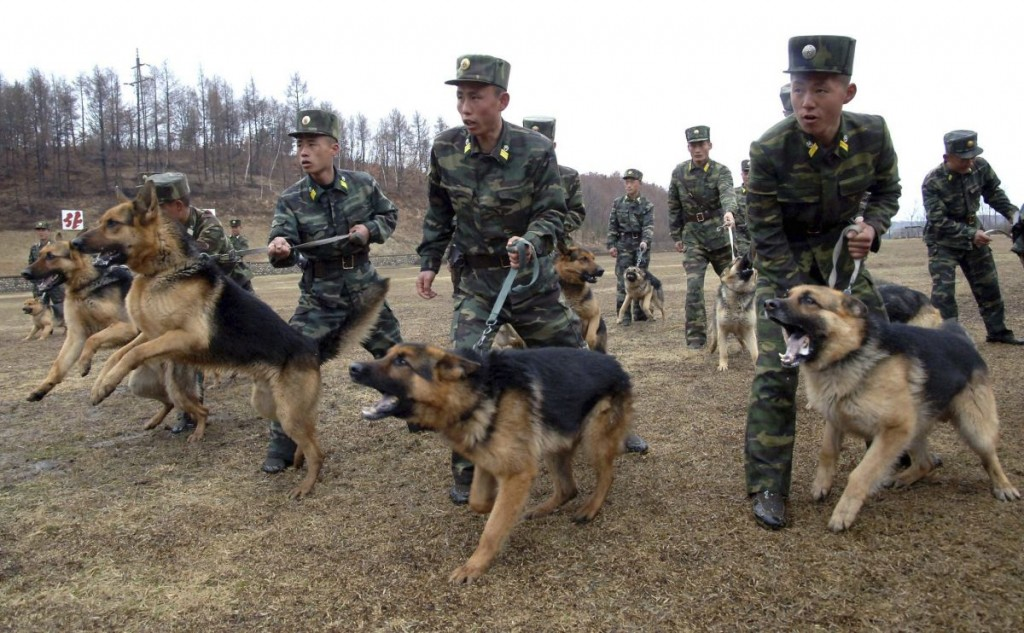 North Korean soldiers with military dogs take part in drills in an unknown location in this picture taken on April 6, 2013 and released by North Korea's official KCNA news agency in Pyongyang on April 7, 2013. REUTERS/KCNA (NORTH KOREA: - Tags: POLITICS MILITARY TPX IMAGES OF THE DAY) ATTENTION EDITORS - THIS PICTURE WAS PROVIDED BY A THIRD PARTY. REUTERS IS UNABLE TO INDEPENDENTLY VERIFY THE AUTHENTICITY, CONTENT, LOCATION OR DATE OF THIS IMAGE. FOR EDITORIAL USE ONLY. NOT FOR SALE FOR MARKETING OR ADVERTISING CAMPAIGNS. THIS IMAGE HAS BEEN SUPPLIED BY A THIRD PARTY. IT IS DISTRIBUTED, EXACTLY AS RECEIVED BY REUTERS, AS A SERVICE TO CLIENTS. NO THIRD PARTY SALES. NOT FOR USE BY REUTERS THIRD PARTY DISTRIBUTORS - RTXYBPZ