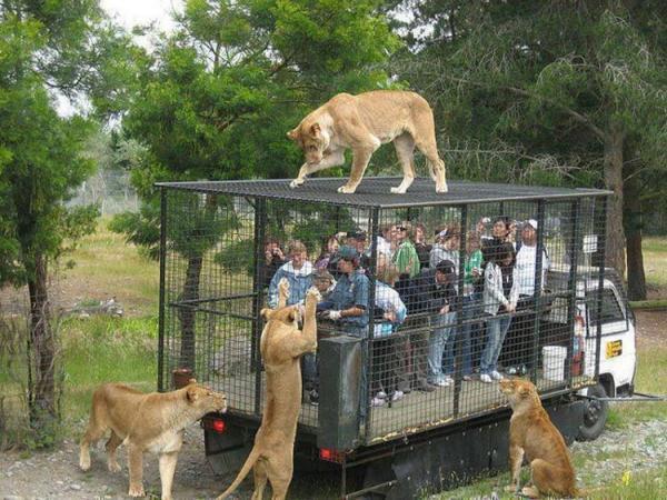 1460985172_zoopark-zveri-7