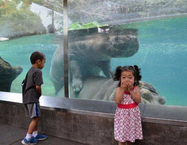 1460985248_zoopark-zveri-3