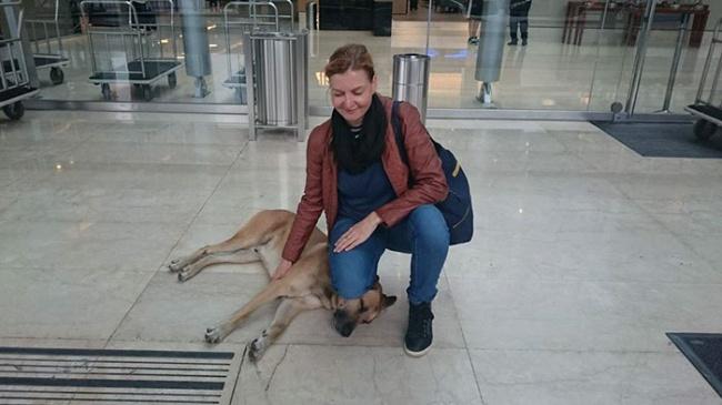 16337365-stray-dog-waits-flight-attendant-adopts-rubio-olivia-sievers-13-1470879596-650-8aeff94694-1470898074