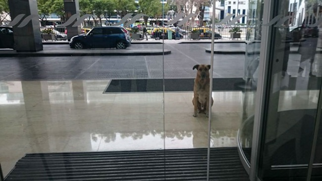 16337415-stray-dog-waits-flight-attendant-adopts-rubio-olivia-sievers-16-1470879332-650-8aeff94694-1470898074