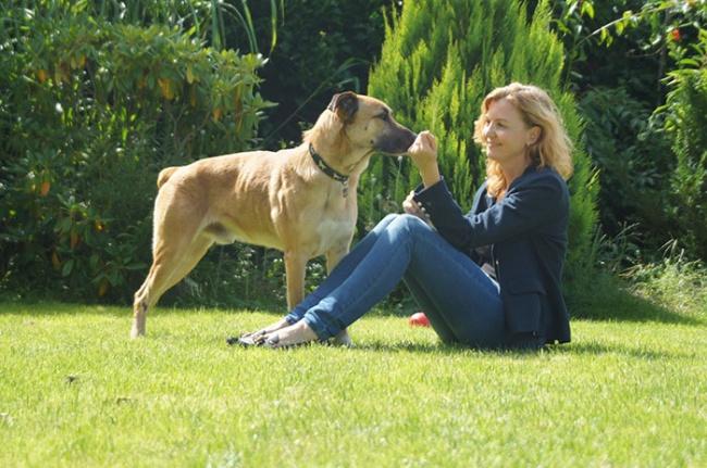 16337465-stray-dog-waits-flight-attendant-adopts-rubio-olivia-sievers-2-1470879984-650-8aeff94694-1470898074