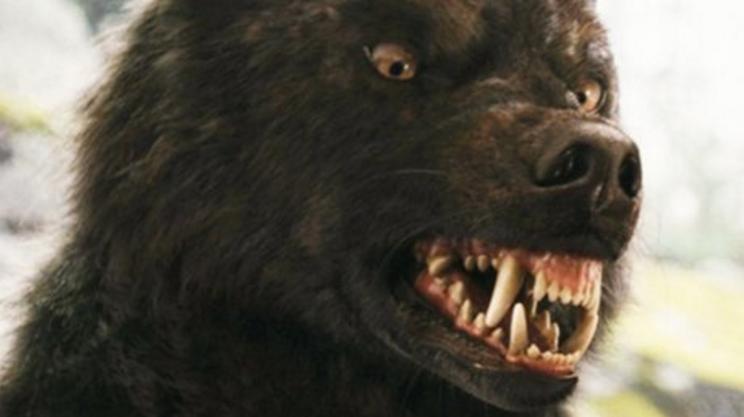 Волчонок  Оборотень 16 сезон смотреть онлайн сериал все