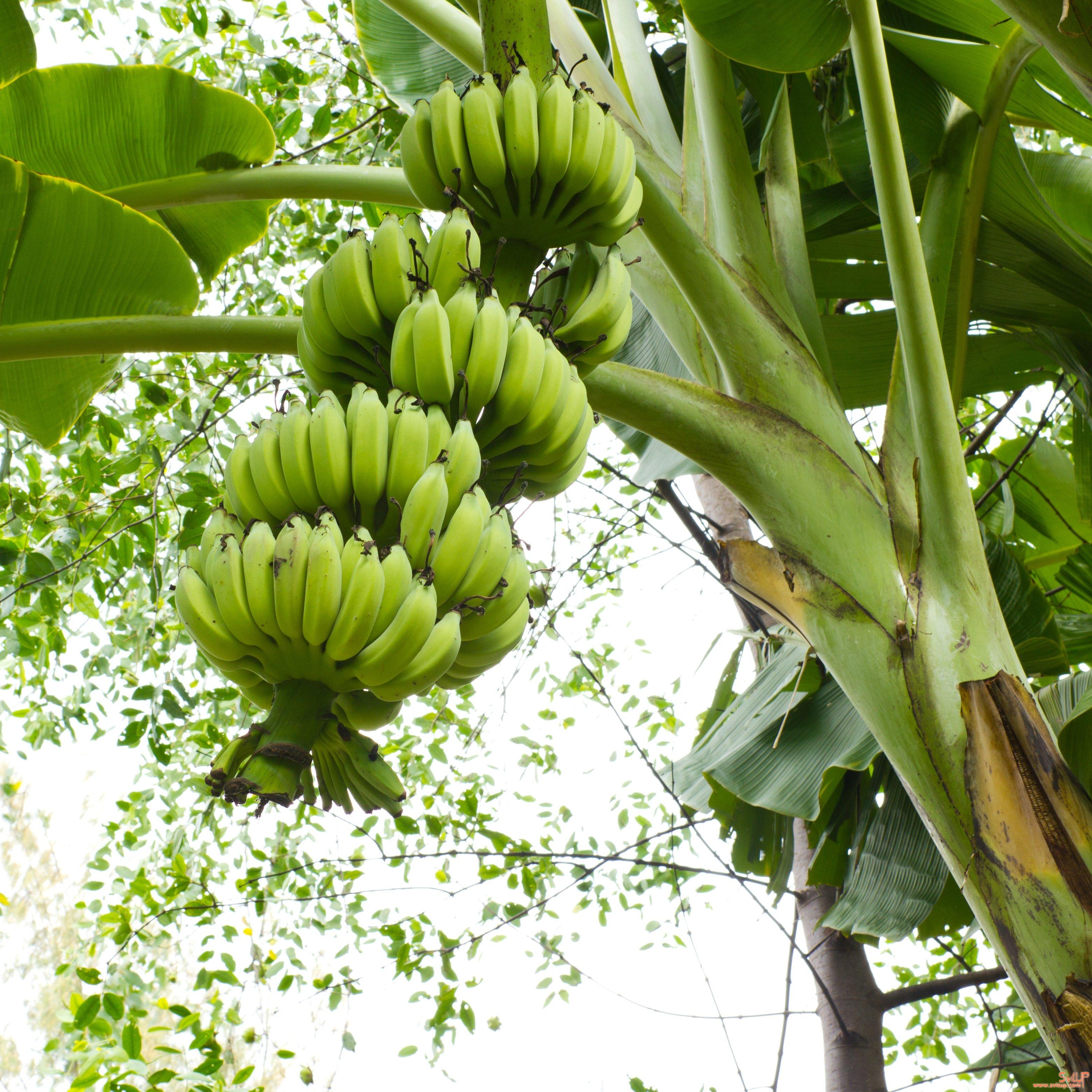 Как жуют бананы фото кольцевым движением