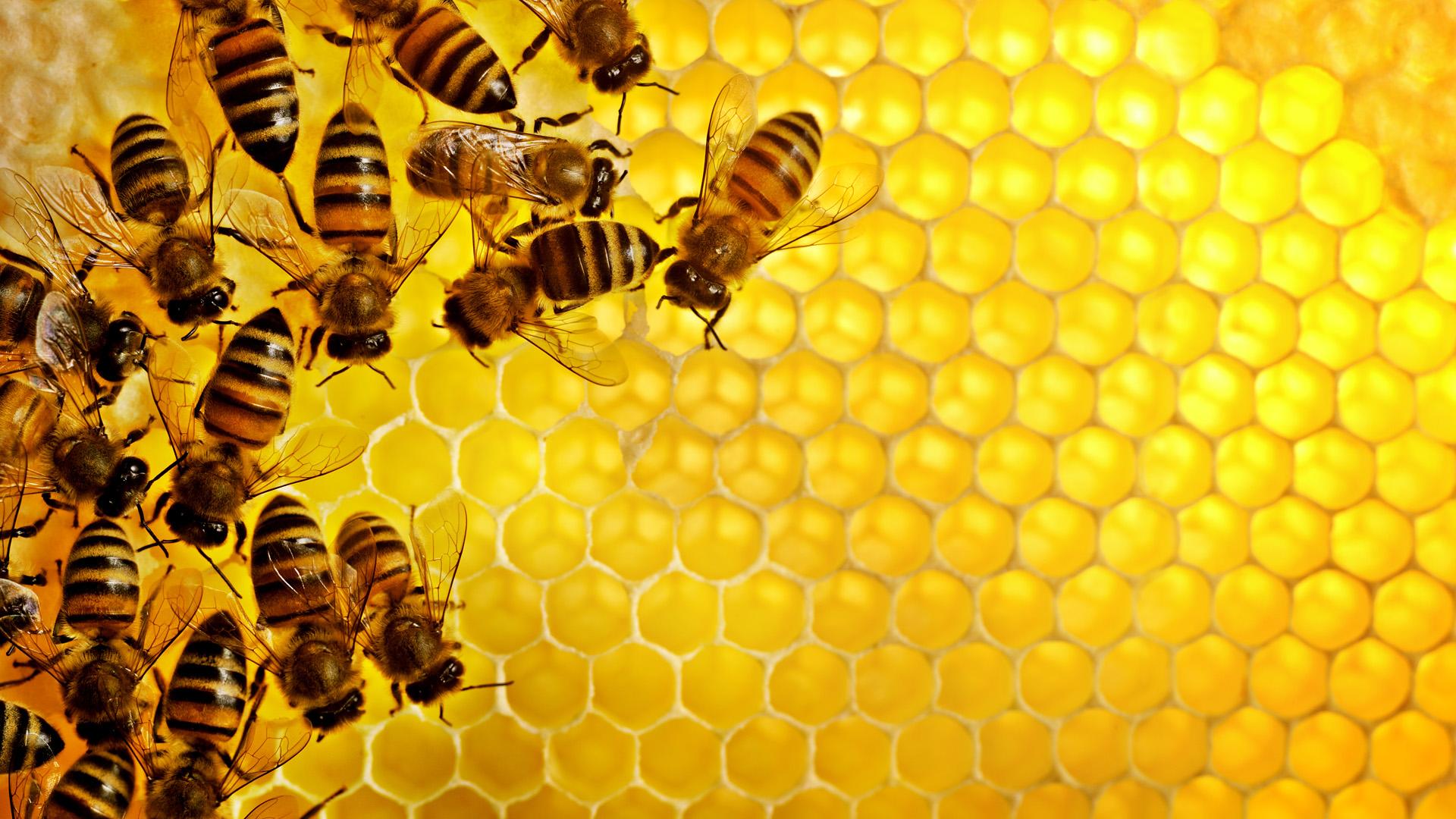 Honey bees Sweden --- Image by © Jonn/Johnér Images/Corbis
