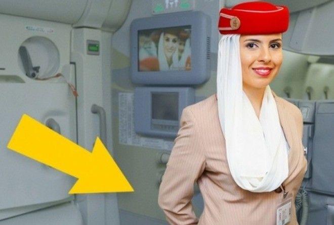 stewardesspng1200x630_q85_crop-center_upscale-png_tumb_660 (1)
