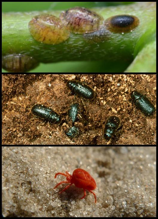 признаки присутствия паразитов в организме