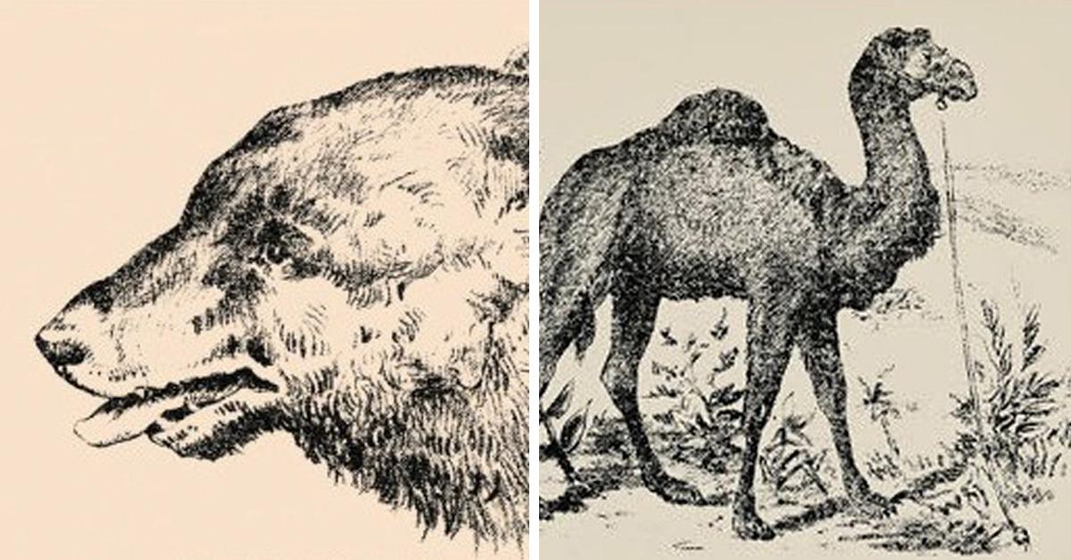 поэтому картинка из животных найди верблюда что город, путь