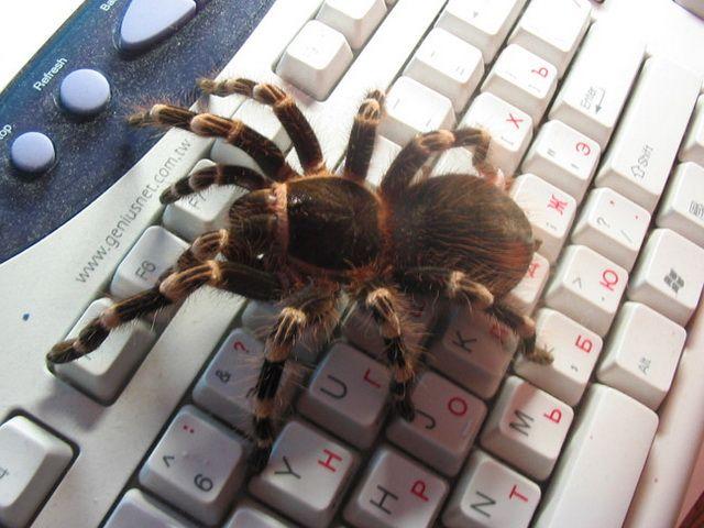 pochemu-nelzya-ubivat-paukov