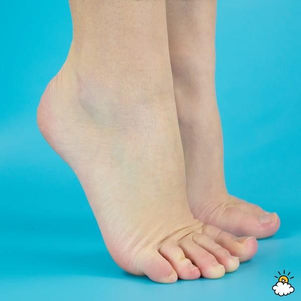 Изображение - Сустав ноги 10 1-233