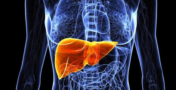 synevo-liver