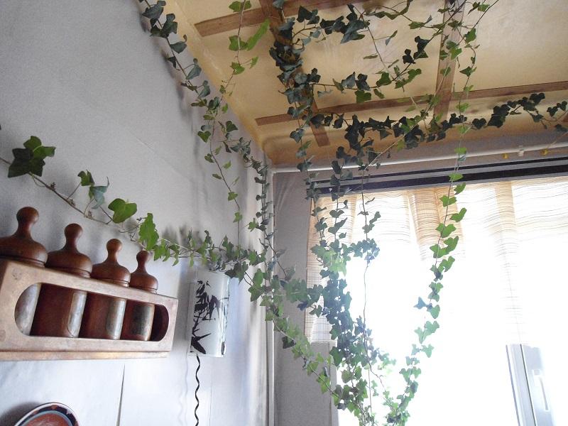 Картинки по запросу Живые растения, стебли которых увивают стены