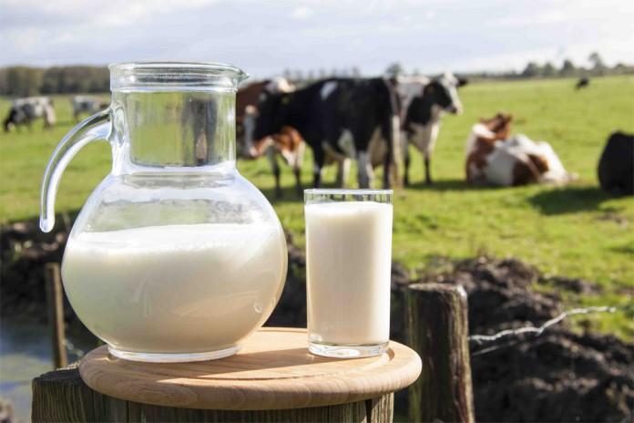 milk-696x464