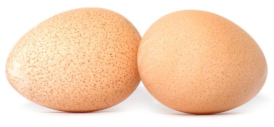 guinea-fowl-eggs