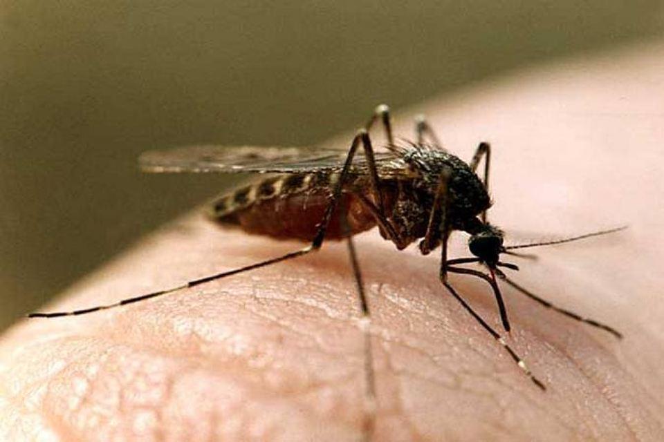 комариный-укус-1