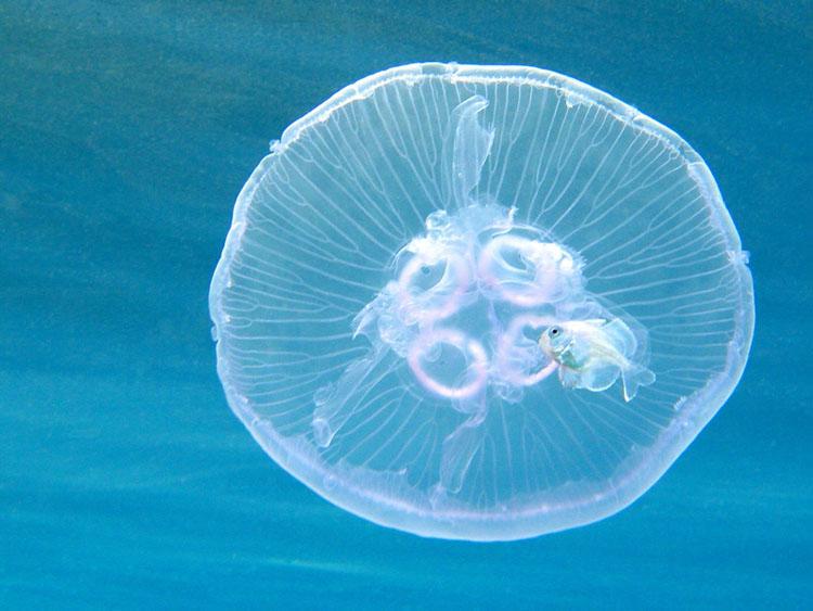 meduza-22