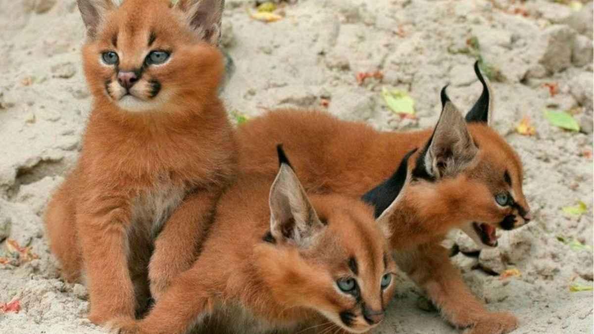 Фото кошек на природе
