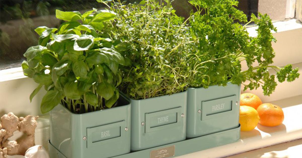 8 трав, которые можно вырастить на кухонном подоконнике 40