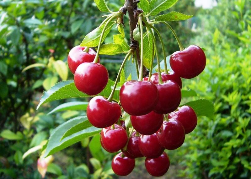 Создаем домашний сад: 8 фруктов и ягод, которые можно выращивать в квартире