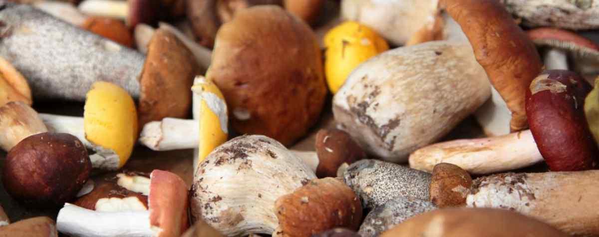 Кому точно противопоказаны грибы и почему их нельзя употреблять
