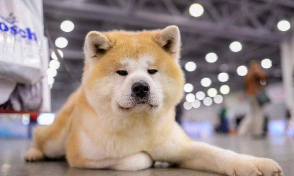 Фотографию этого пса внесли в школьный альбом и вот почему