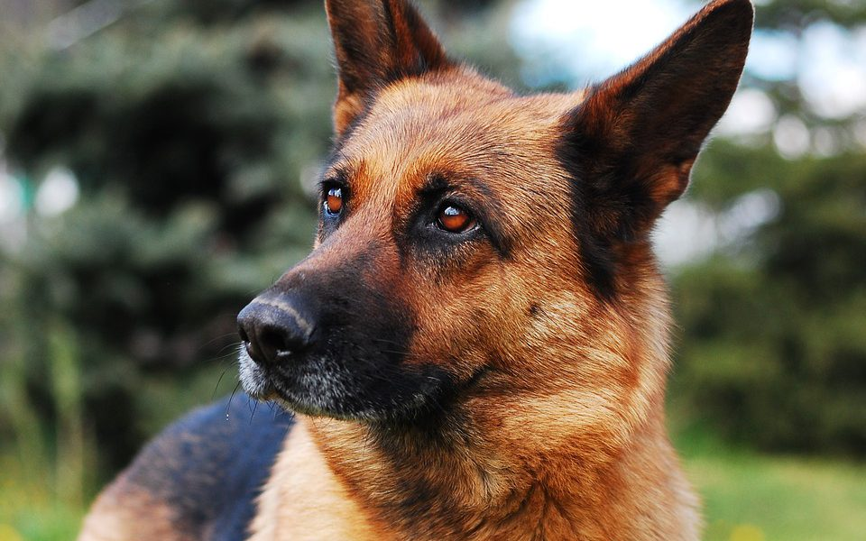 «Простите его… и нас, пожалуйста!»: в дом к хорошим людям однажды забрел пес