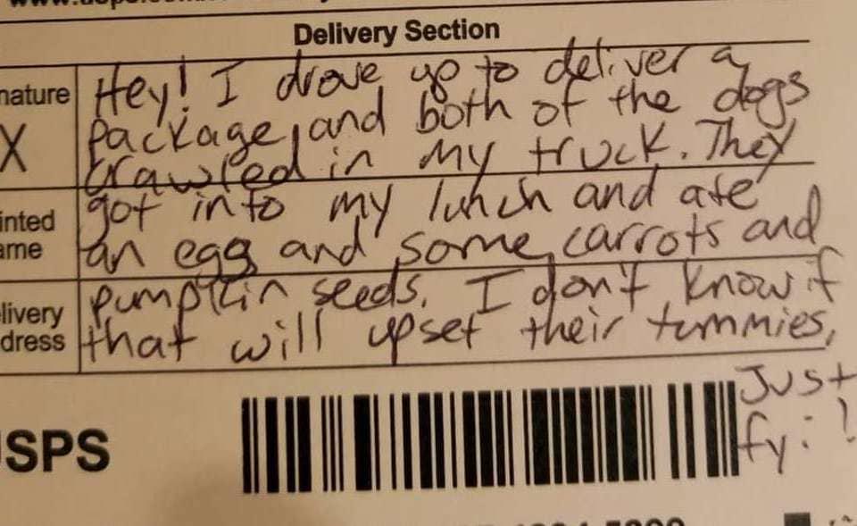 Две собаки украли обед у курьера, но он не обиделся, а оставил милую записку. Хозяева в долгу не остались