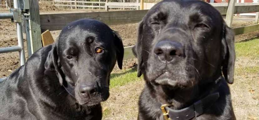 Две собаки украли обед у курьера, но он не обиделся, а оставил милую записку. Хозяева в долгу не остались | Истории | Отдых