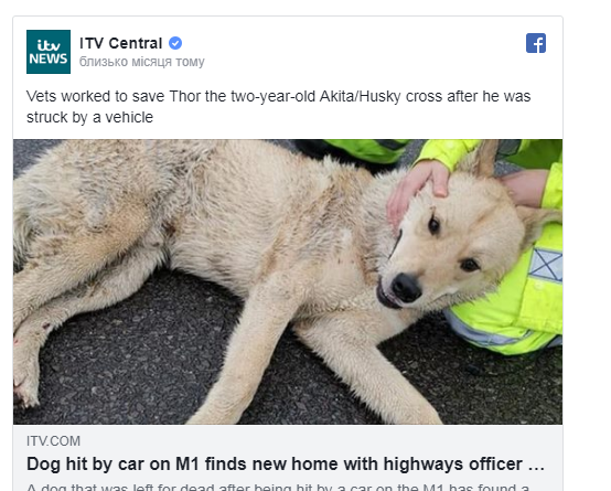 Пёс попал в ДТП, и хозяин потребовал усыпить его. Но нашлись добрые люди