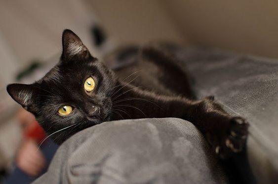 Кошка спасла хозяина от пожара, но не смогла выбраться сама