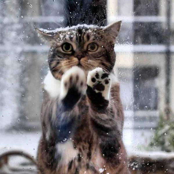 Кошка пришла к людям просить о помощи, в снегу замерзали ее котята | Истории | Отдых