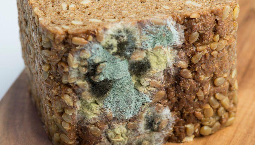 Почему нельзя есть хлеб с плесенью?