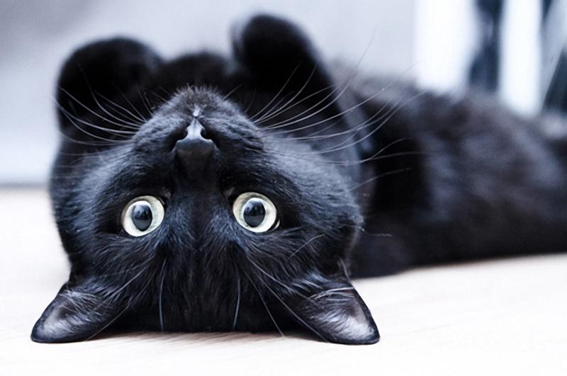 История о мстительном и хитром коте