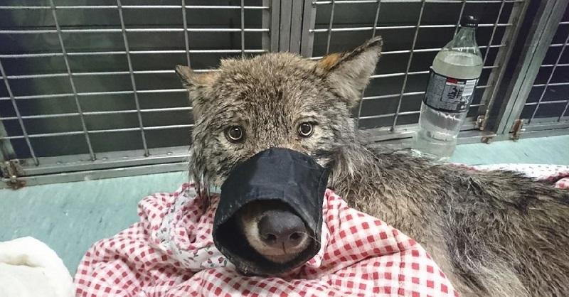 Вытащили из ледяной воды собаку: но отвезя ее к ветеринару, их поджидал сюрприз