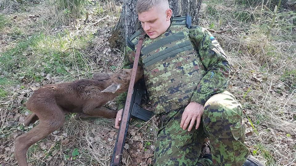 Беззащитный лосёнок подкрался к вооруженному солдату. То, что было после — просто невероятно!