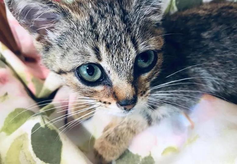 Бездомного котенка игнорировали все прохожие, и только одна женщина решилась спасти животное | Истории | Отдых