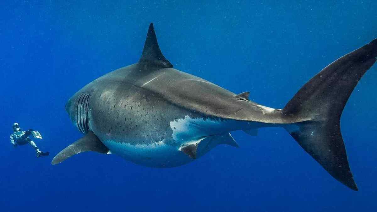 Невероятный отец! Мужчина спас жизнь своей дочери, голыми руками отбив её у акулы | Истории | Отдых
