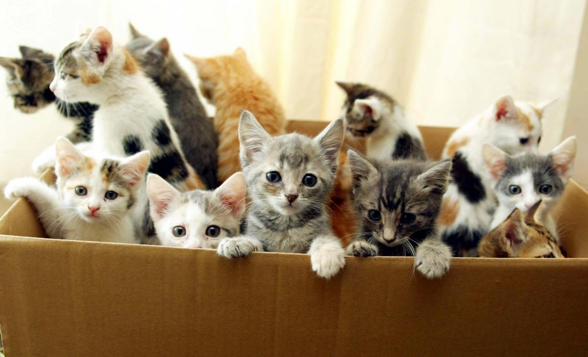 На следующее утро после дня рождения Сьюзен нашла у себя на пороге огромную коробку