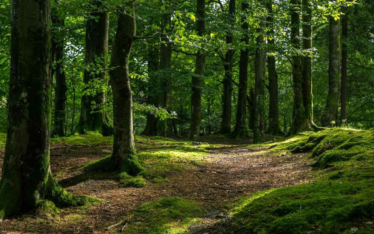 Мэр решил наказать людей, которые превратили лес в свалку. Для этого он выбрал очень необычный способ… | Истории | Отдых