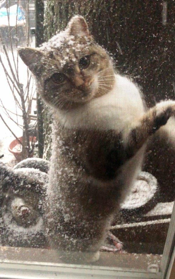 Выглянув утром в окно, девушка увидела замерзшую кошку с тремя котятами