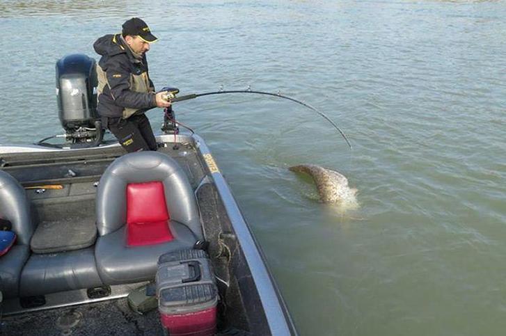 Рыбак понял, что на крючок попало что-то крупное, но он никак не ожидал увидеть это