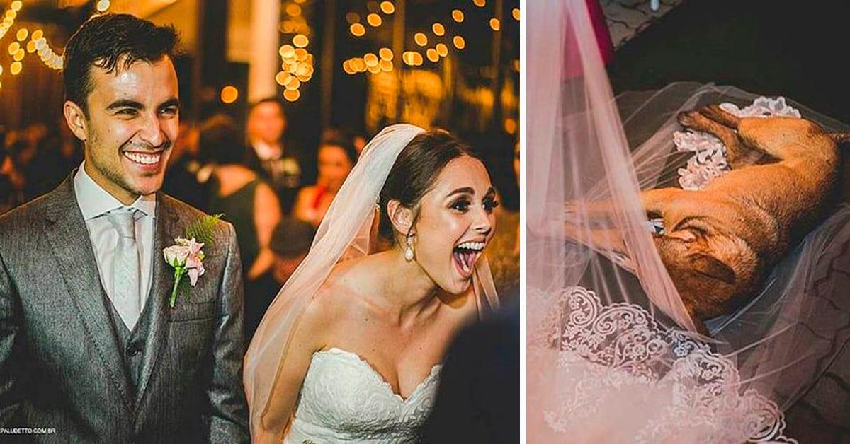 История о псе, который сорвал свадьбу, обрёл семью и покорил интернет