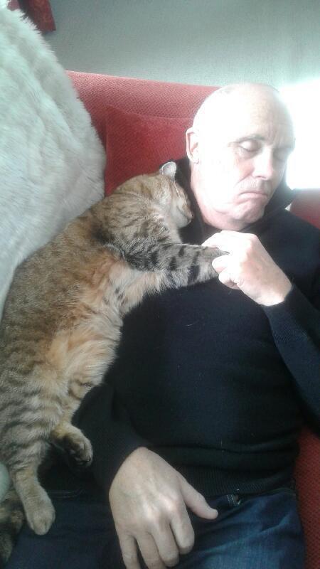 Мужчина, восстанавливающийся после операции, проснулся с кошкой, которой у него нет